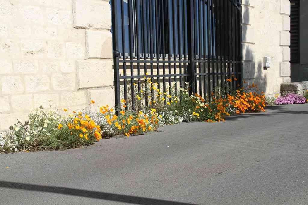 La Ville de Cosne vous invite à fleurir vos pieds de murs !
